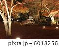 公園 もみじ 紅葉の写真 6018256