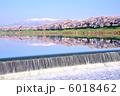 さくら並木 桜 川の写真 6018462