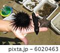 自然水族館 6020463