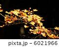 カエデ ヤマモミジ もみじの写真 6021966