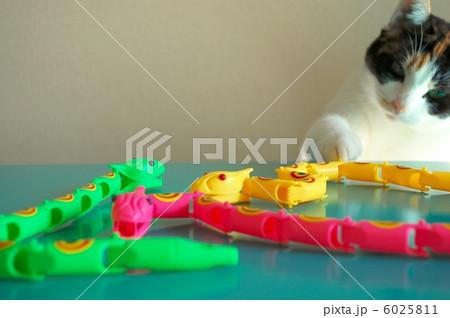 猫とヘビのおもちゃ 6025811