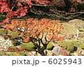 楓 モミジ 黄葉の写真 6025943