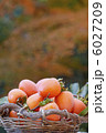 カキ 柿 かきの写真 6027209