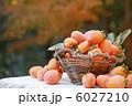 カキ 柿 かきの写真 6027210