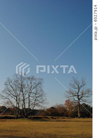 飛火野の秋景色(奈良公園にて撮影) 6027914
