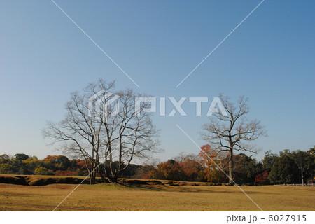 飛火野の秋景色(奈良公園にて撮影) 6027915