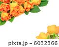 薔薇 6032366