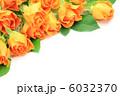 薔薇 6032370