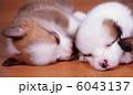 眠る仔犬 6043137