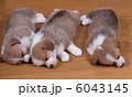 眠る仔犬 6043145