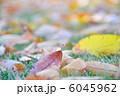 木の葉 枯れ葉 葉っぱの写真 6045962