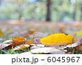 木の葉 枯れ葉 葉っぱの写真 6045967