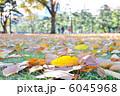 木の葉 枯れ葉 葉っぱの写真 6045968