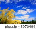 すすき 穂 秋空の写真 6070494