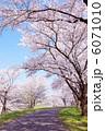 桜の並木道 6071010