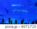 水族館 6071710