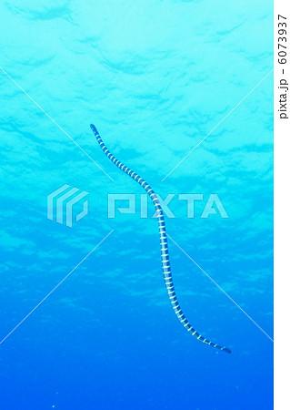 海蛇2 6073937
