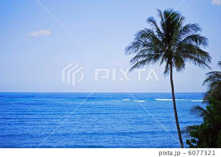 カイルアビーチとヤシの木 6077321