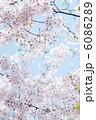 満開の桜 6086289