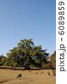 飛火野の風景と鹿(奈良公園にて撮影) 6089859