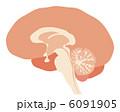 脳の断面図 6091905