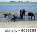 ゾウの家族 6096365