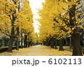 銀杏 黄葉 並木の写真 6102113
