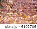 枯葉 もみじ 紅葉 落葉 落ち葉 おちば かえで 6102706