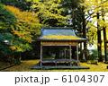 京都府北区 岩戸落葉神社の落葉 6104307