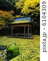 京都府北区 岩戸落葉神社の落葉 6104309