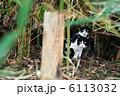 親猫 ネコ 親子の写真 6113032