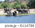 水浴び 水飲み 象の写真 6114786