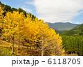 小松山 イチョウ 紅葉の写真 6118705