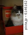 LORA BOX 6146162