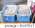 しらす漁 生シラス シラス漁の写真 6147617