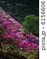 咲き乱れる春・三室戸寺 6156606