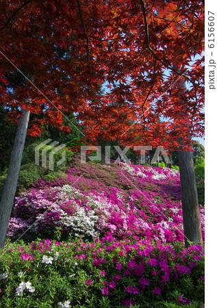 咲き乱れる春・三室戸寺 6156607
