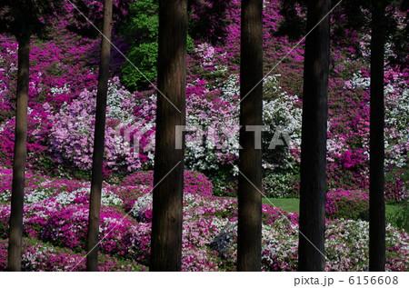 春の屏風・三室戸寺 6156608