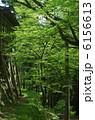 新緑・古知谷阿弥陀寺 6156613
