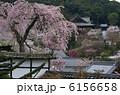 長谷寺・満開の春 6156658
