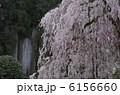 大野寺・磨崖仏と枝垂れ桜 6156660