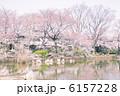 桜と沼 6157228
