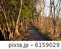 登山道 山道 道の写真 6159029
