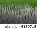 稲作 田んぼ 水田の写真 6160716