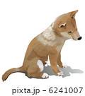 イヌ 柴犬 犬のイラスト 6241007