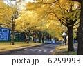銀杏並木 イチョウ並木 いちょう並木の写真 6259993