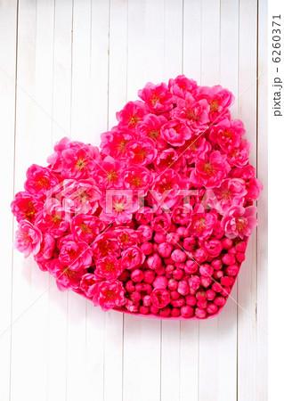 白いウッドデッキに置いた ハート型のピンクの桃の花  6260371
