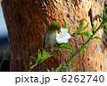 メジロ 鳥 小鳥の写真 6262740