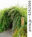 ハギ 向島百花園 萩の写真 6262866