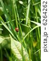 草 昆虫 植物の写真 6264262